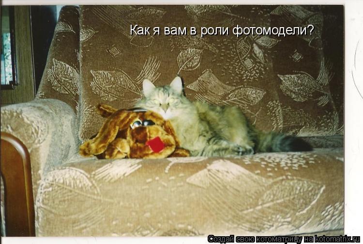Котоматрица: Как я вам в роли фотомодели?