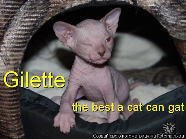 Котоматрица: Gilette the best a cat can gat