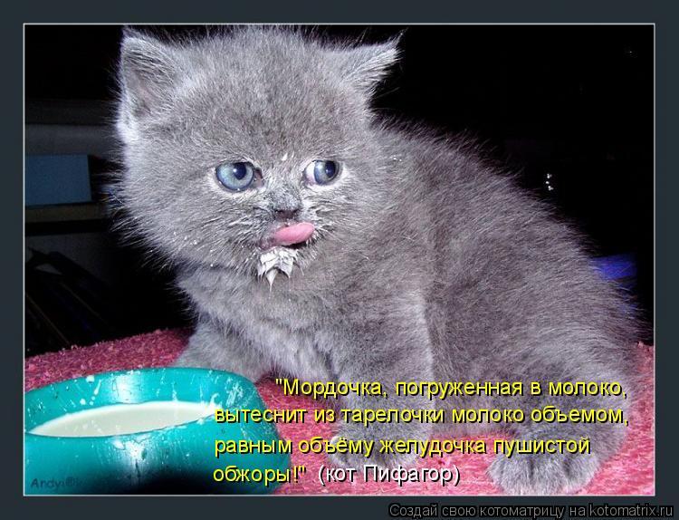 """Котоматрица: """"Мордочка, погруженная в молоко, вытеснит из тарелочки молоко объемом, равным объёму желудочка пушистой обжоры!"""" (кот Пифагор)"""