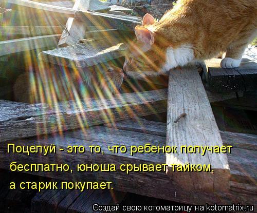 Котоматрица: Поцелуй - это то, что ребенок получает  бесплатно, юноша срывает тайком,  а старик покупает.