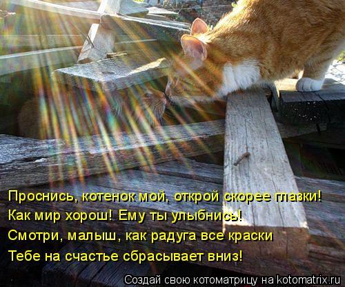 Котоматрица: Проснись, котенок мой, открой скорее глазки! Как мир хорош! Ему ты улыбнись! Смотри, малыш, как радуга все краски Тебе на счастье сбрасывает в