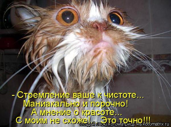 Котоматрица: - Стремление ваше к чистоте... Маниакально и порочно!   А мнение о красоте... С моим не схоже!... Это точно!!!