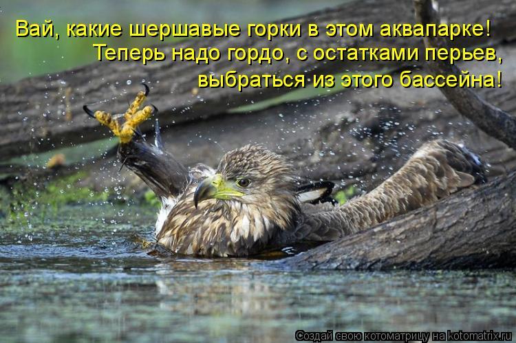 Котоматрица: Вай, какие шершавые горки в этом аквапарке! Теперь надо гордо, с остатками перьев,  выбраться из этого бассейна!