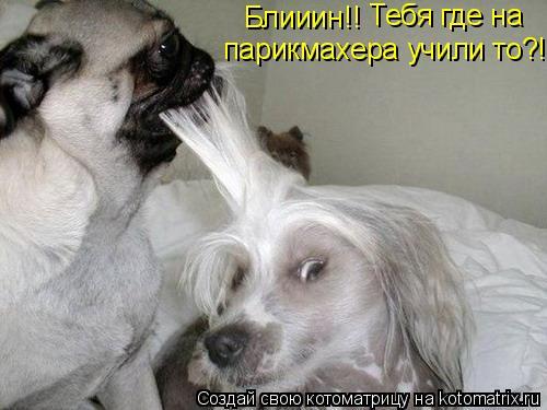 Котоматрица: Блииин!!  Тебя где на   парикмахера учили то?!!