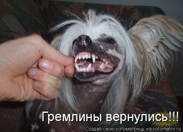 Котоматрица: Гремлины вернулись!!!