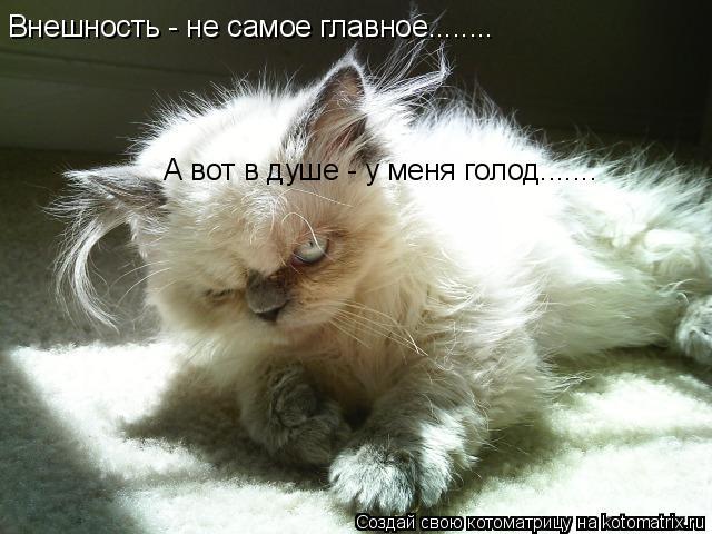 Котоматрица: Внешность - не самое главное........ А вот в душе - у меня голод.......