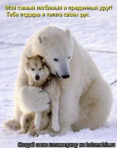 Котоматрица: Мой самый любимый и преданный друг! Тебе подарю я тепло своих рук.