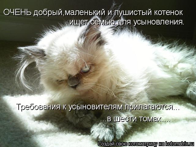 Котоматрица: ОЧЕНЬ добрый,маленький и пушистый котенок ищет семью для усыновления. Требования к усыновителям прилагаются... ...в шести томах....
