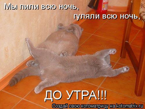 Котоматрица: Мы пили всю ночь,  гуляли всю ночь,  ДО УТРА!!!