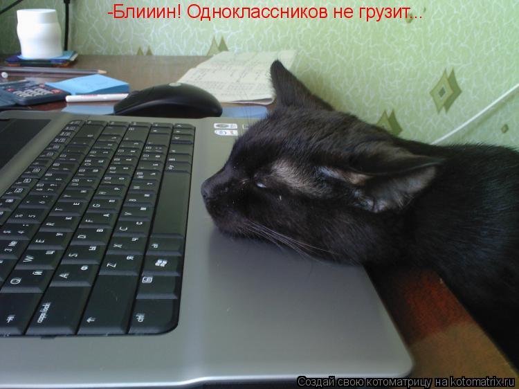 Котоматрица: -Блииин! Одноклассников не грузит...