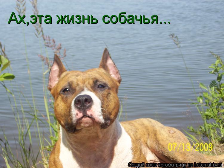Котоматрица: Ах,эта жизнь собачья...