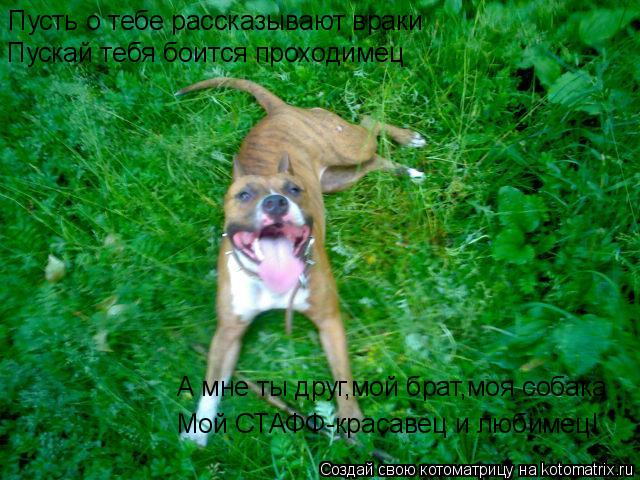 Котоматрица: Пусть о тебе рассказывают враки Пускай тебя боится проходимец А мне ты друг,мой брат,моя собака Мой СТАФФ-красавец и любимец!