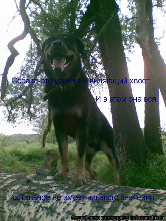 Котоматрица: Собака-это улыбка и виляющий хвост. И в этом она вся, остальное не имеет никакого значения.