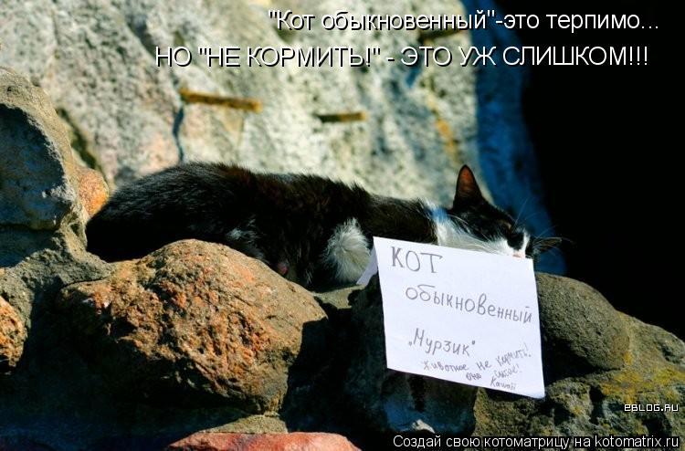 """Котоматрица: """"Кот обыкновенный""""-это терпимо... НО """"НЕ КОРМИТЬ!"""" - ЭТО УЖ СЛИШКОМ!!!"""