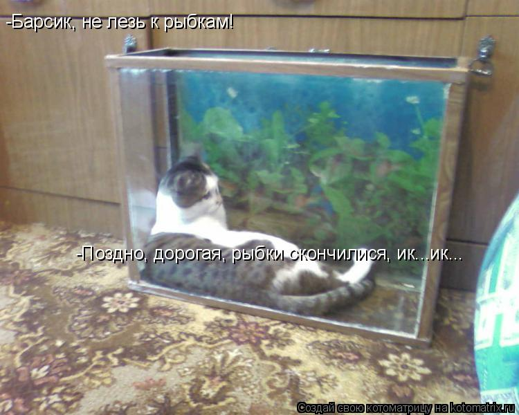 Котоматрица: -Барсик, не лезь к рыбкам! -Поздно, дорогая, рыбки скончилися, ик...ик...