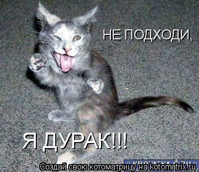 Котоматрица: НЕ ПОДХОДИ, Я ДУРАК!!!