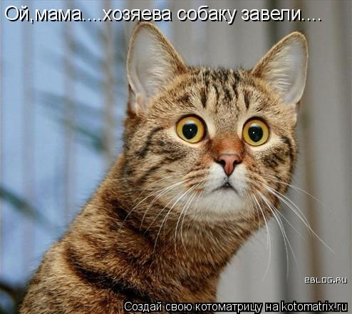 Котоматрица: Ой,мама....хозяева собаку завели....