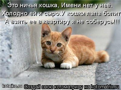 Котоматрица: Это ничья кошка, Имени нет у неё. Холодно ей и сыро.У кошки лапа болит, А взять ее в квартиру я не соберусь!!!