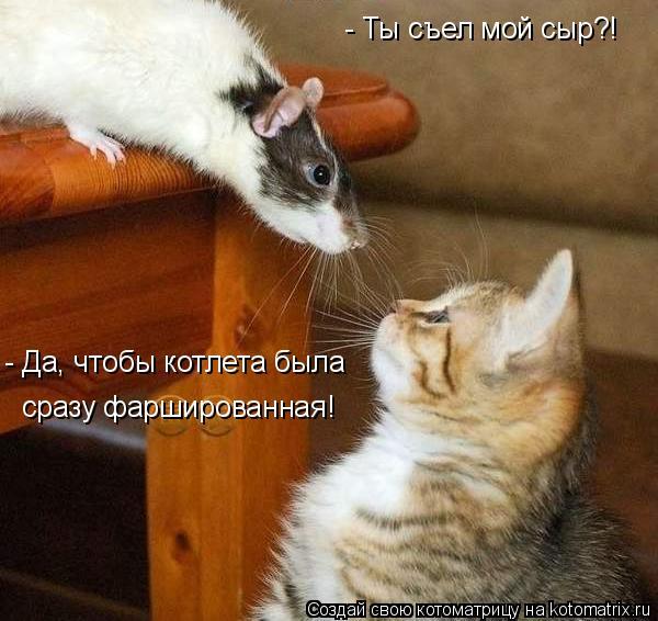 Котоматрица: - Ты съел мой сыр?! - Да, чтобы котлета была сразу фаршированная!