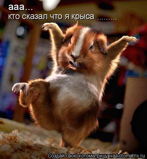Котоматрица: ааа... кто сказал что я крыса  .........
