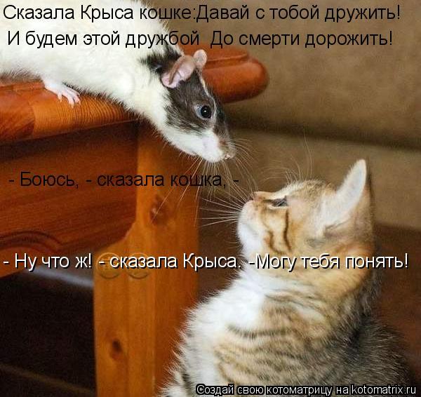 Котоматрица: И будем этой дружбой  До смерти дорожить! Сказала Крыса кошке:Давай с тобой дружить! - Боюсь, - сказала кошка, - - Ну что ж! - сказала Крыса. -Могу