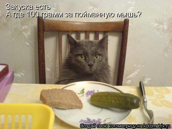 Котоматрица: Закуска есть А где 100 грамм за пойманную мышь?