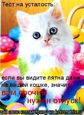 Котоматрица: Тест на усталость: если вы видите пятна даже на вашей кошке, значит вам срочно нужен отпуск!