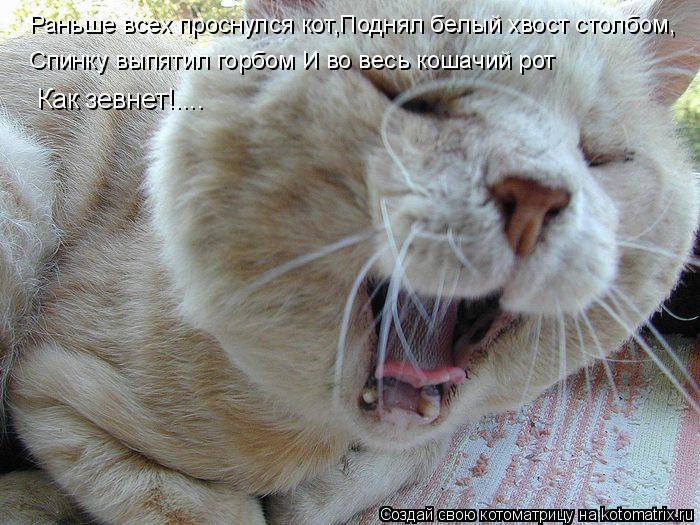 Котоматрица: Раньше всех проснулся кот,Поднял белый хвост столбом, Спинку выпятил горбом И во весь кошачий рот Спинку выпятил горбом И во весь кошачий р
