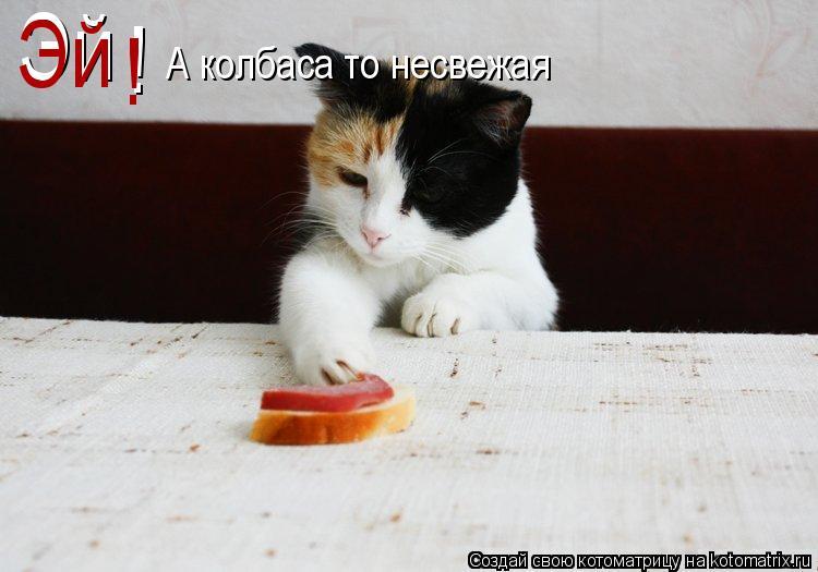 Котоматрица: Эй Эй ! ! А колбаса то несвежая