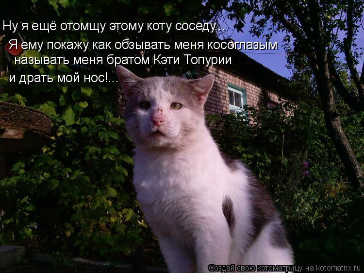 Котоматрица: Ну я ещё отомщу этому коту соседу... Я ему покажу как обзывать меня косоглазым называть меня братом Кэти Топурии и драть мой нос!...