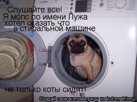 Котоматрица: Слушайте все! Я мопс по имени Лужа хотел сказать что в стиральной машине не только коты сидят!