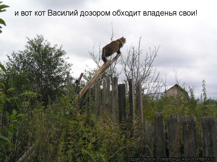 Котоматрица: и вот кот Василий дозором обходит владенья свои!