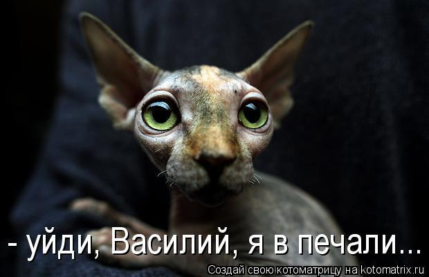Котоматрица: - уйди, Василий, я в печали...