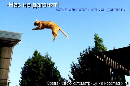 Котоматрица: -Нас не дагонят! хоть бы долететь, хоть бы долететь...