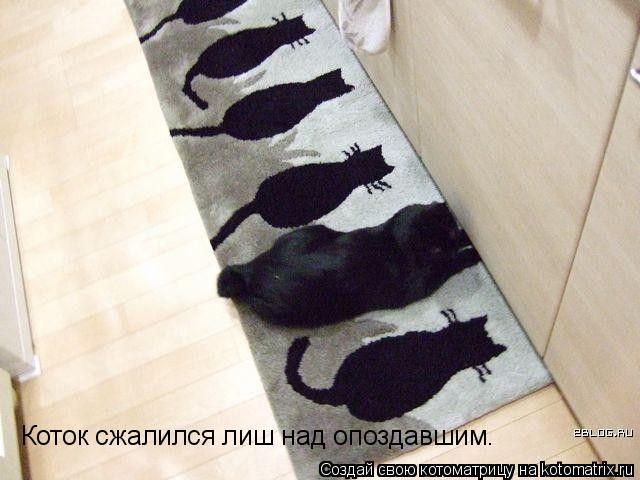 Котоматрица: Коток сжалился лиш над опоздавшим.