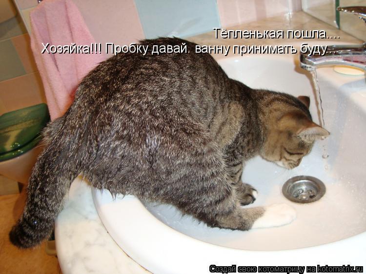 Котоматрица: Тёпленькая пошла.... Хозяйка!!! Пробку давай. ванну принимать буду...