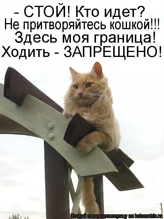 Котоматрица: - СТОЙ! Кто идет?  Не притворяйтесь кошкой!!! Здесь моя граница!  Ходить - ЗАПРЕЩЕНО!