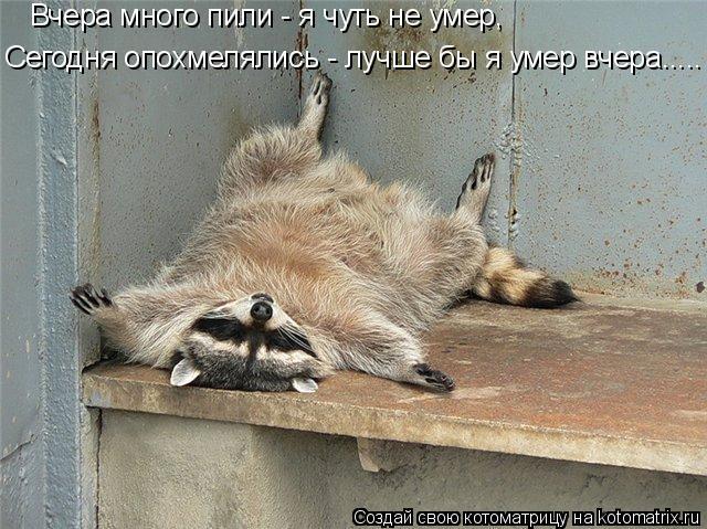 Котоматрица: Вчера много пили - я чуть не умер, Сегодня опохмелялись - лучше бы я умер вчера.....