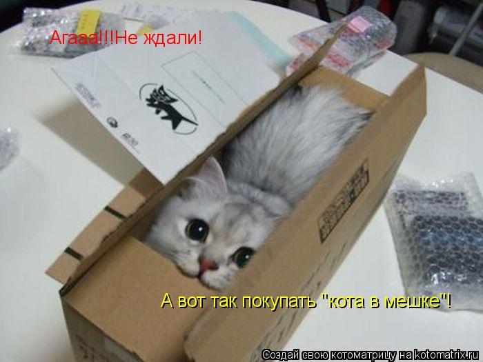 """Котоматрица: Агааа!!!Не ждали! А вот так покупать """"кота в мешке""""!"""