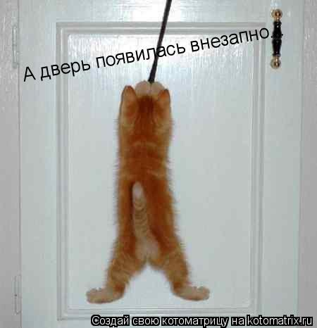 Котоматрица: А дверь появилась внезапно...