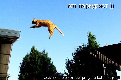 Котоматрица: кот паркурист ))