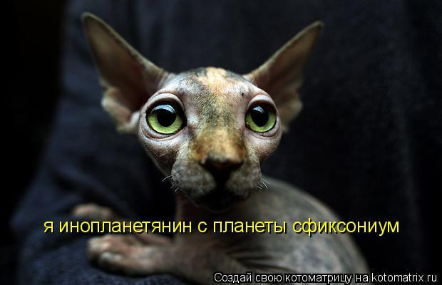 Котоматрица: я инопланетянин с планеты сфиксониум