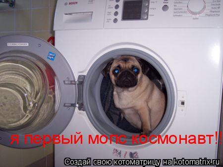 Котоматрица: я первый мопс космонавт!!