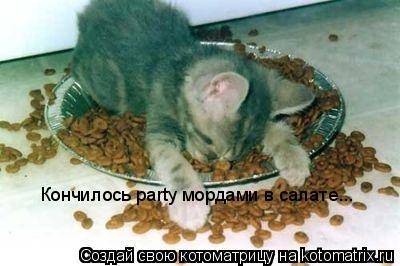 Котоматрица: Кончилось party мордами в салате...