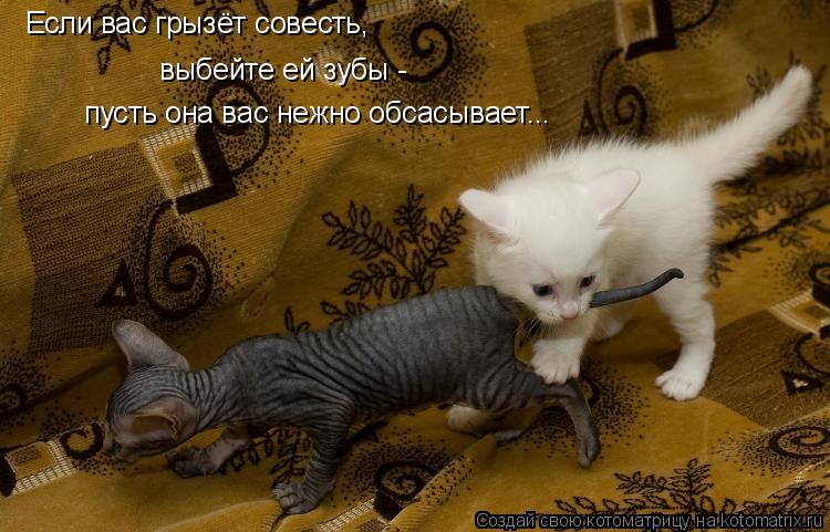 Котоматрица: Если вас грызёт совесть, выбейте ей зубы -  пусть она вас нежно обсасывает...