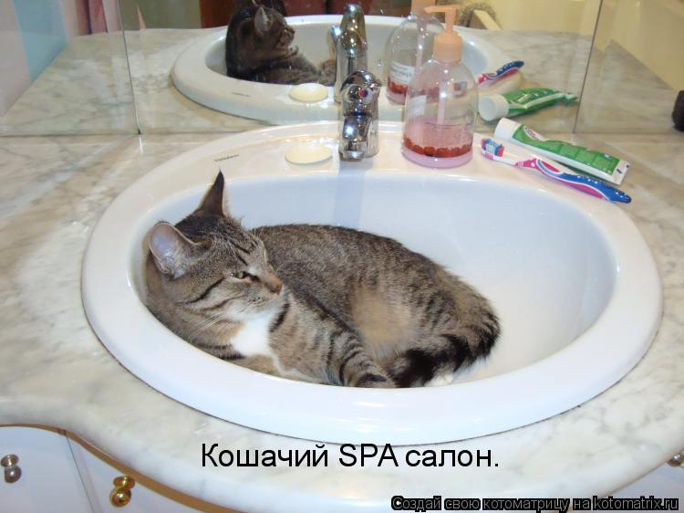 Котоматрица: Кошачий SPA салон.