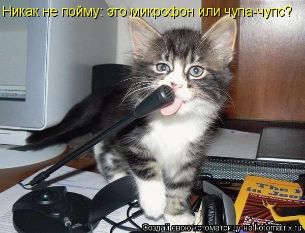 Котоматрица: Никак не пойму: это микрофон или чупа-чупс?
