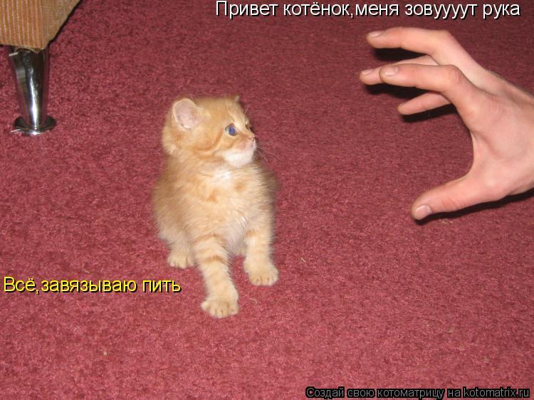 Котоматрица: Привет котёнок,меня зовуууут рука Всё,завязываю пить