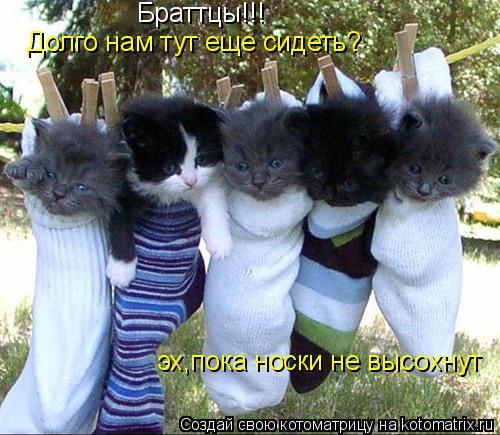 Котоматрица: Браттцы!!! Долго нам тут еще сидеть? эх,пока носки не высохнут