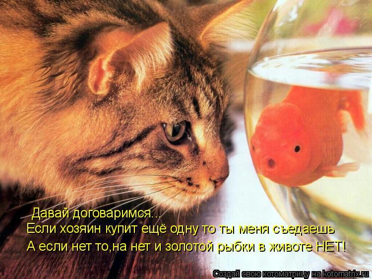 Котоматрица: Давай договаримся... Если хозяин купит ещё одну то ты меня съедаешь А если нет то,на нет и золотой рыбки в животе НЕТ!